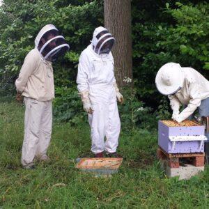 formation-apiculteur-ecole-cours