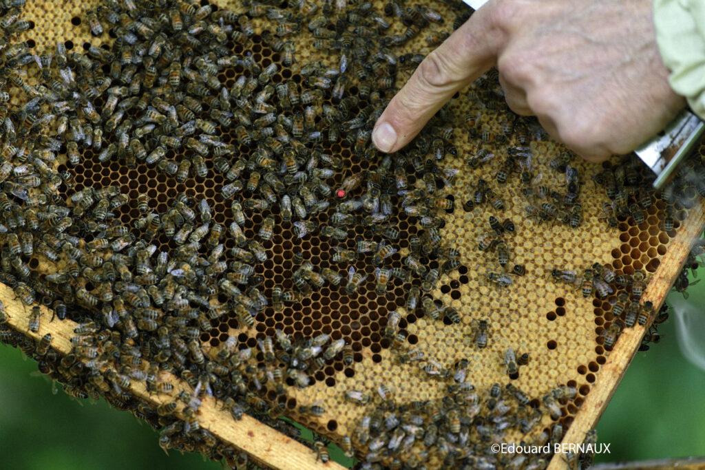 Locaruche, partenaire de l'entreprise d'apiculture Digizz