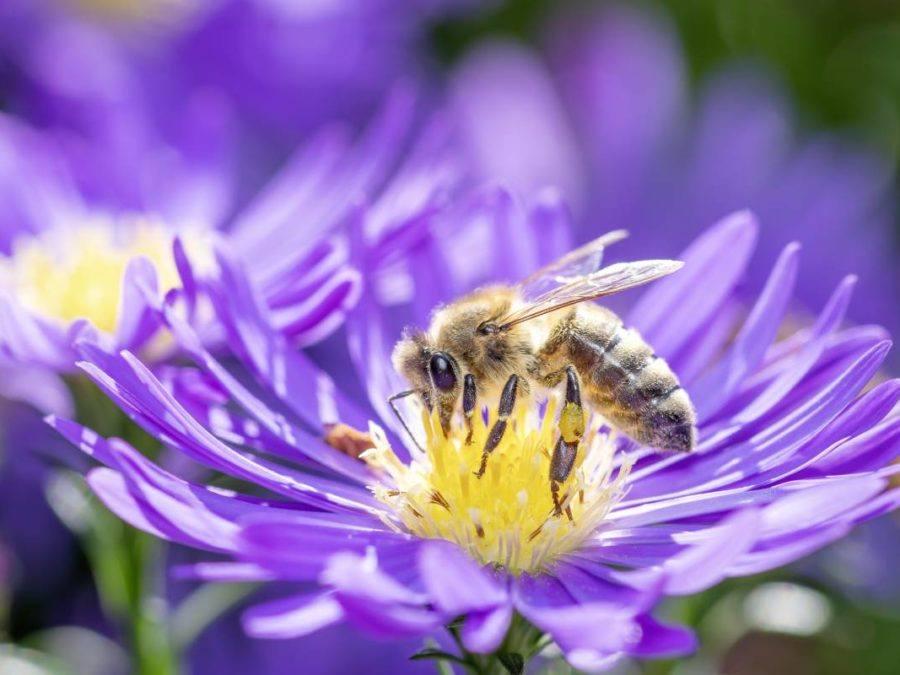Comment la ruche pédagogique permet de sensibiliser à la biodiversité - Digizz