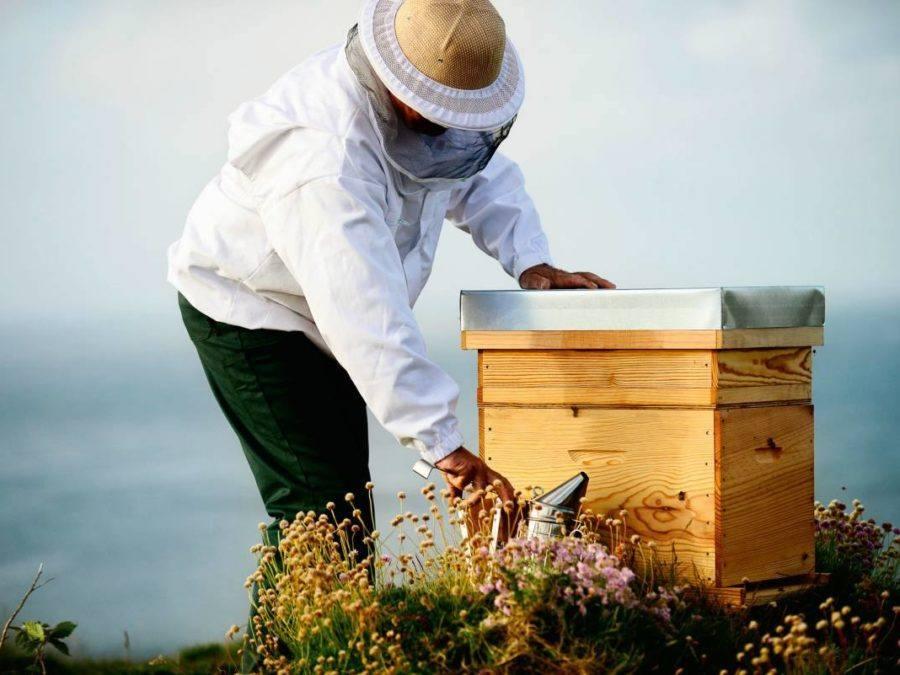 Quelles activités autour de la ruche pédagogique - Digizz