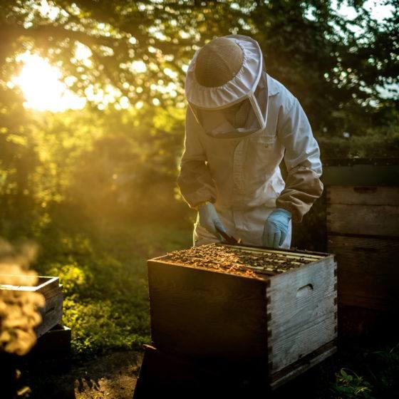 diplome-devenir-apiculteur-digizz